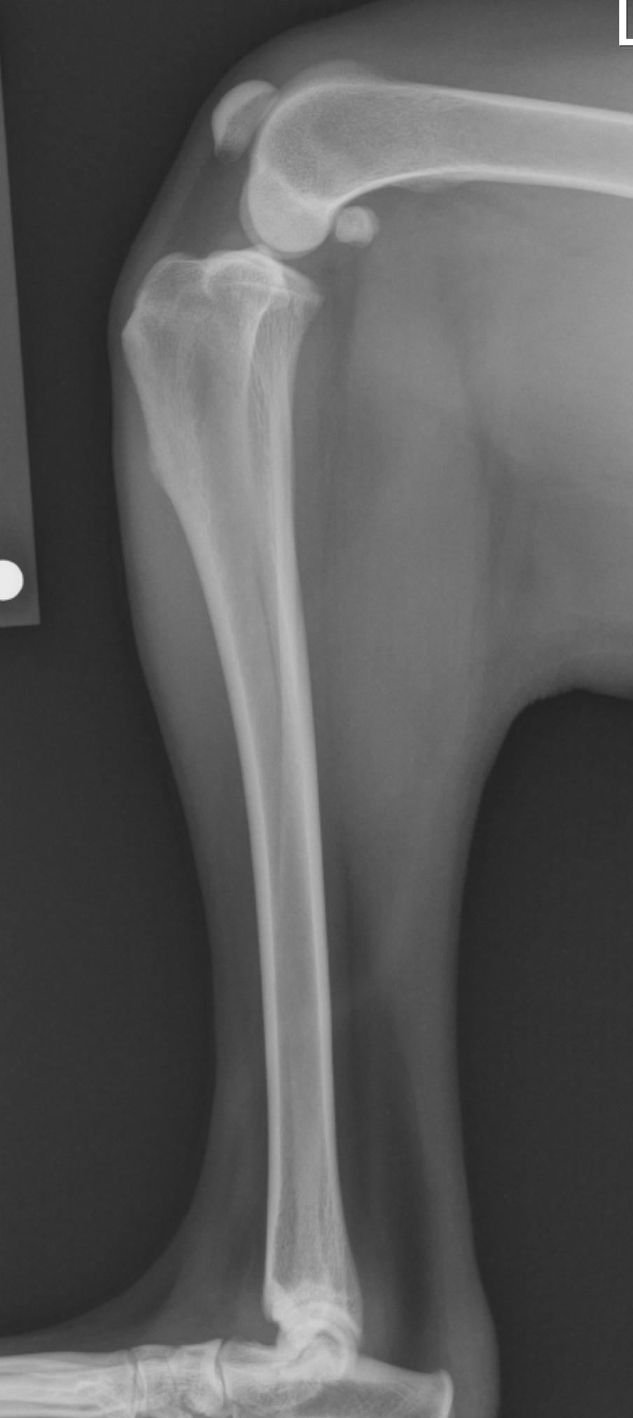 Tplo A Veterinarian S Perspective