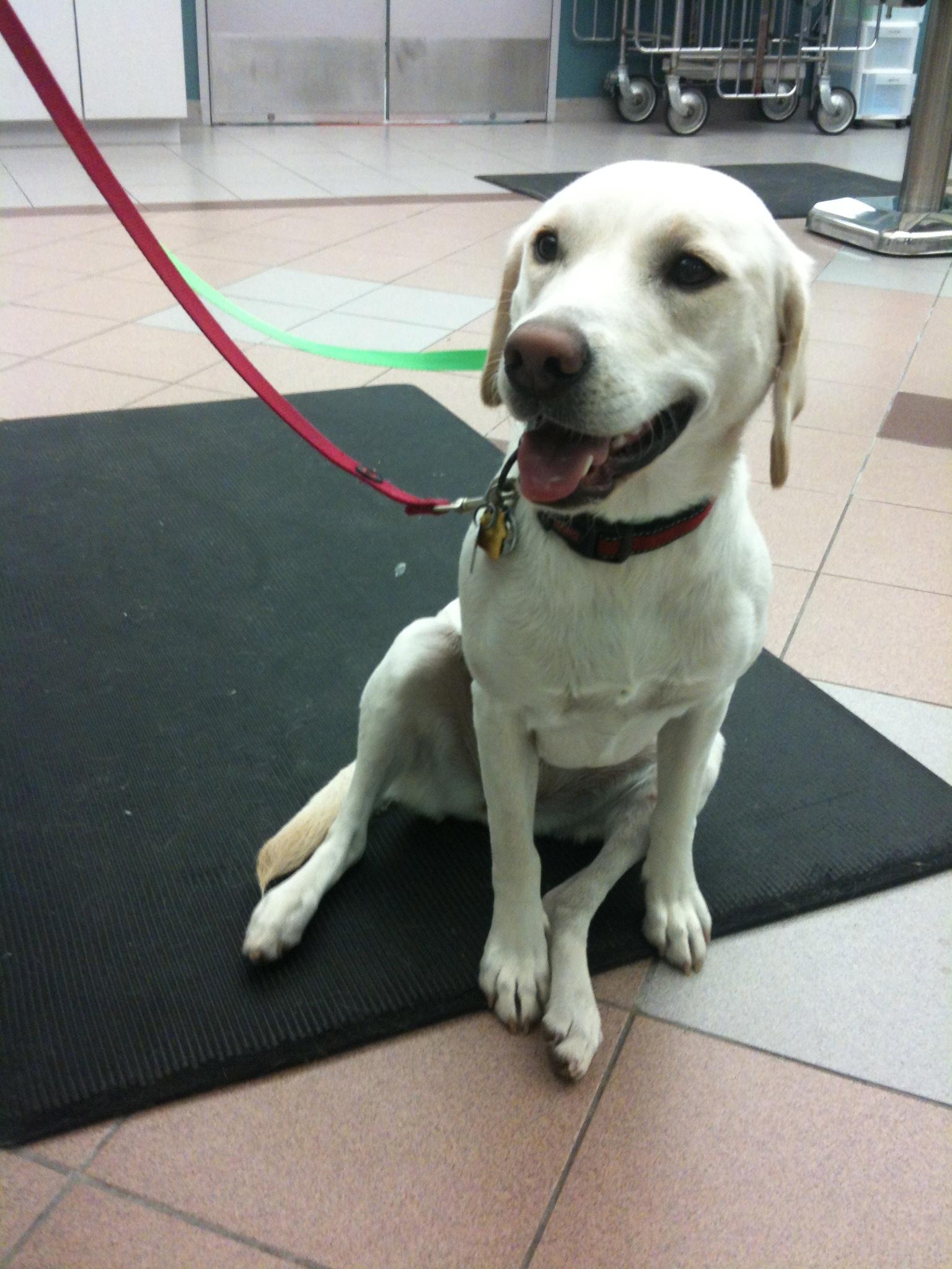 Cranial Drawer Test Dog Video