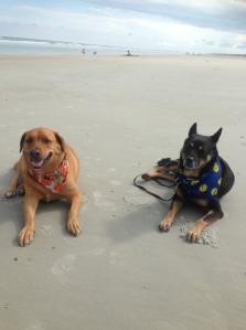 Scooter (left) enjoying the beach!!