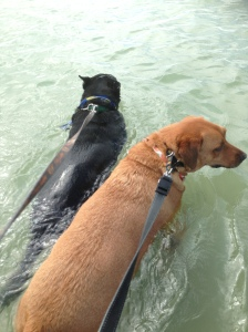 Scooter and his buddy enjoying a swim!!
