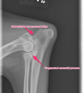 Lateral view of the left elbow: elbow dysplasia